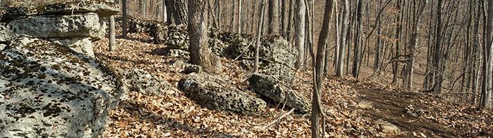 Greensfelder - Fossil Ridge